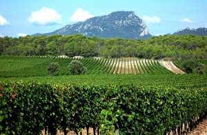 Près de Saint Mathieu de Tréviers, Languedoc, le sol sec du Pic Saint Loup